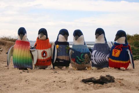 свитер для пингвина